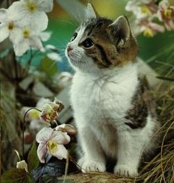 kucing1